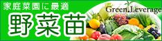 野菜の苗の購入は苗問屋